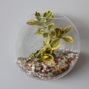 All Glass Terrarium – Large Hanging Wall Bowl