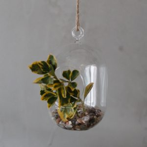 All Glass Terrarium -Oval Hanging Wall Bowl