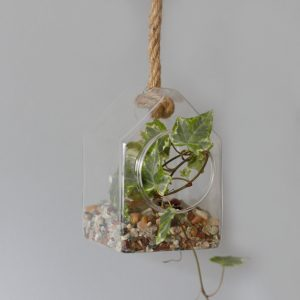 All Glass Terrarium -Hanging House on Rope