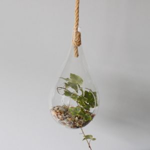 All Glass Terrarium -Hanging Teardrop  on Rope