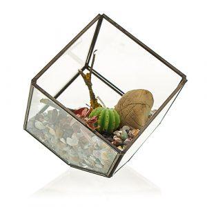Glass Terrarium – Cube On Corner